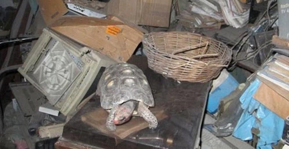Thất lạc rùa cưng suốt 30 năm, cả gia đình không khỏi sửng sốt khi tìm thấy con vật ở nơi không thể ngờ tới - Ảnh 3.