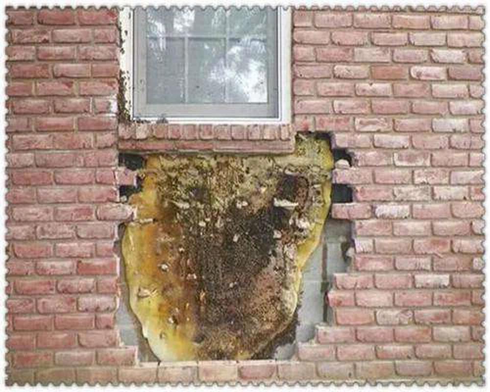 Nghe thấy âm thanh lạ phát ra từ tường nhà, người đàn ông lấy máy khoan ra đục rồi vui như bắt được vàng khi thấy thứ bên trong - Ảnh 2.