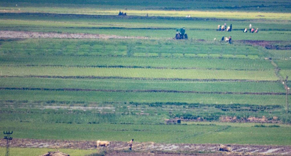 Ảnh hiếm về nông thôn Triều Tiên khi tình hình lương thực căng thẳng - Ảnh 4.