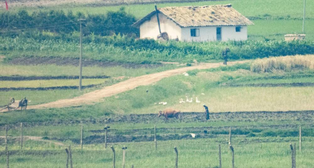 Ảnh hiếm về nông thôn Triều Tiên khi tình hình lương thực căng thẳng - Ảnh 8.