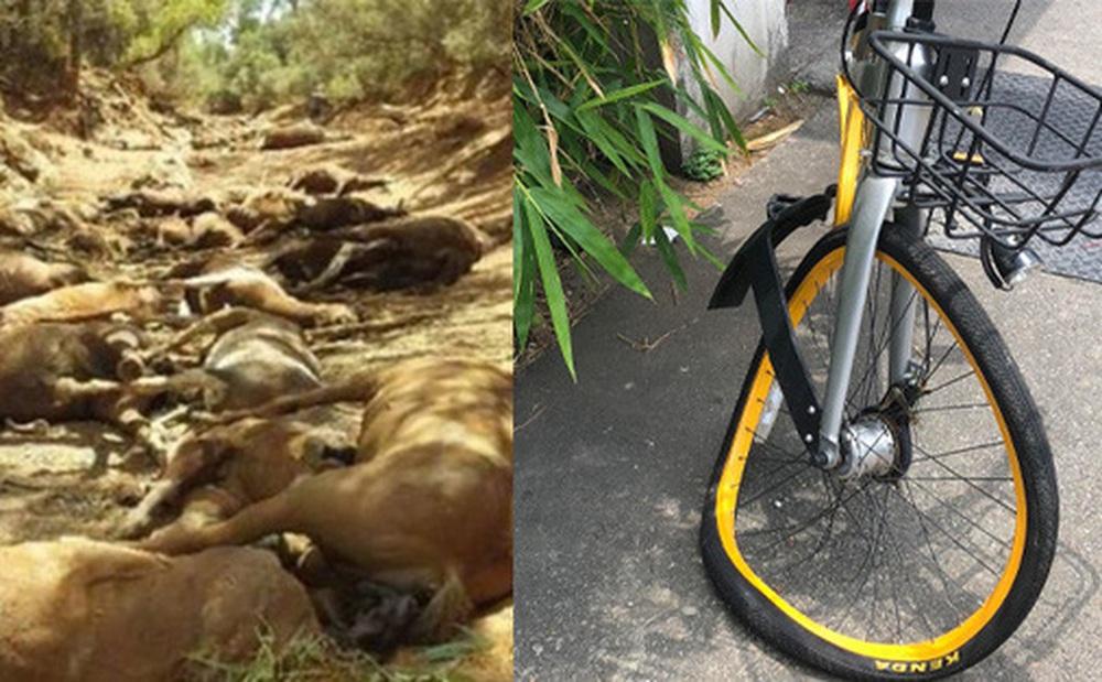 Chùm ảnh nắng nóng kinh hoàng khắp hành tinh: Ngựa lăn ra chết cả đàn, xe đạp cong vành dưới mức nhiệt cực đại