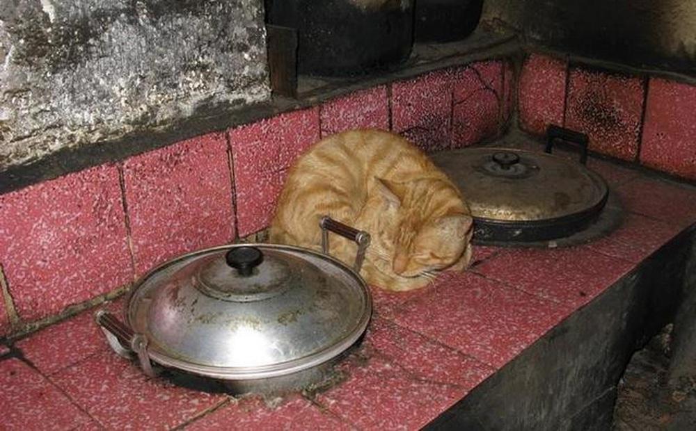 Đem chú mèo hoang về nuôi, 5 năm sau, cả gia đình thoát được một kiếp nạn