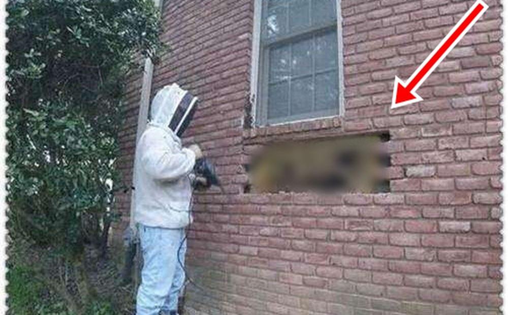 Nghe thấy âm thanh lạ phát ra từ tường nhà, người đàn ông lấy máy khoan ra đục rồi vui như bắt được vàng khi thấy thứ bên trong