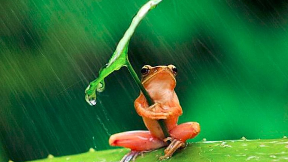 Nhiệt tình chỉ đường cho cua, ếch bị rủa là đồ chết tiệt: Bài học ai cũng nên biết khi giúp đỡ người khác - Ảnh 2.