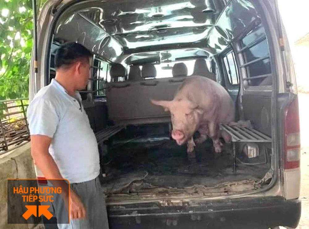 Người dân Nghệ An làm thịt con lợn 260kg chế biến ruốc bông, xúc xích tiếp tế cho điểm nóng Covid-19 Bắc Giang - Ảnh 1.