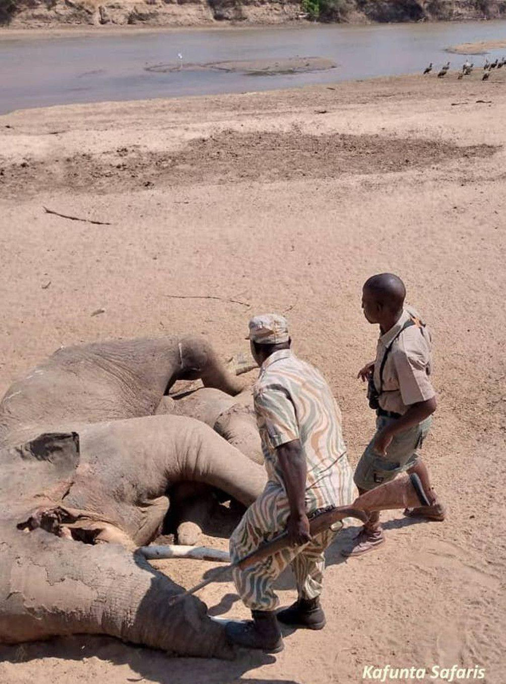 Đến kiểm tra xác voi bên bờ sông, nhà bảo tồn sững sờ khi nhìn thấy thứ bên dưới thi thể 5 tấn - Ảnh 1.