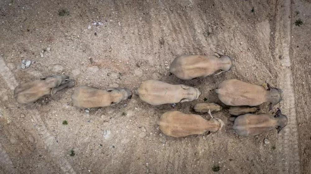Trung Quốc: Đàn voi bất trị gây sốt vì ngủ trưa quá đáng yêu - Ảnh 5.