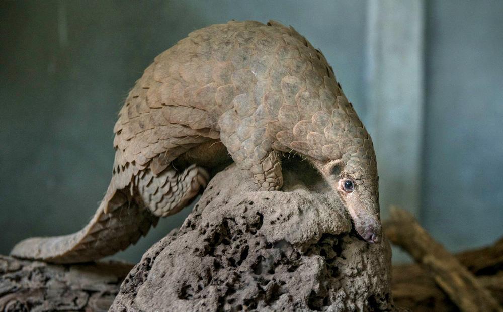 Tiết lộ sốc về số lượng động vật hoang dã bị buôn bán ở Vũ Hán: Manh mối lớn về nguồn gốc COVID-19?