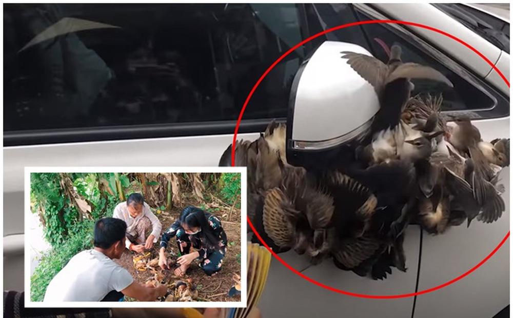 Thủy Tiên bị đào lại clip treo ngược đàn cò lửa trên ô tô chở về quê thả: Phóng sinh như thế bằng mười sát sinh