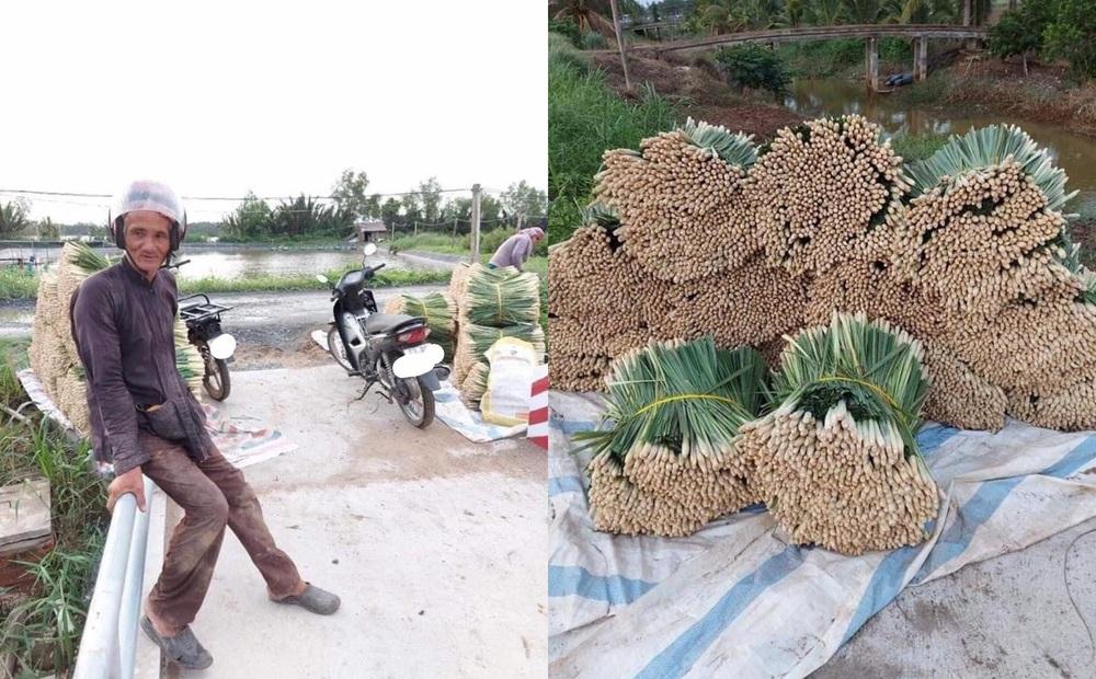 Ông chú U70 dầm mưa thu hoạch một loại củ cả Sài Gòn đang săn lùng, nghe giá bán mới thấy hết hồn