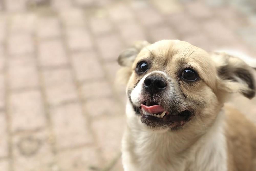 Người phụ nữ nhặt được chú chó hoang nên mang ra tiệm nhờ tắm rửa, không ngờ chủ tiệm vừa nhìn thấy đã hỏi mua bằng được - Ảnh 1.