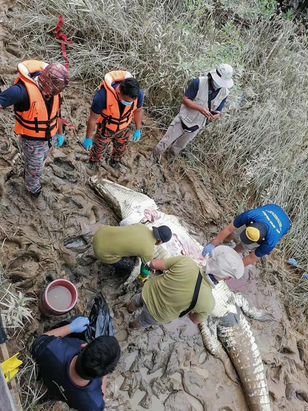 Dùng thịt gà để nhử, nhóm người bắt được con cá sấu khổng lồ, sau khi mổ bụng ra nhiều người bất ngờ òa khóc - Ảnh 2.