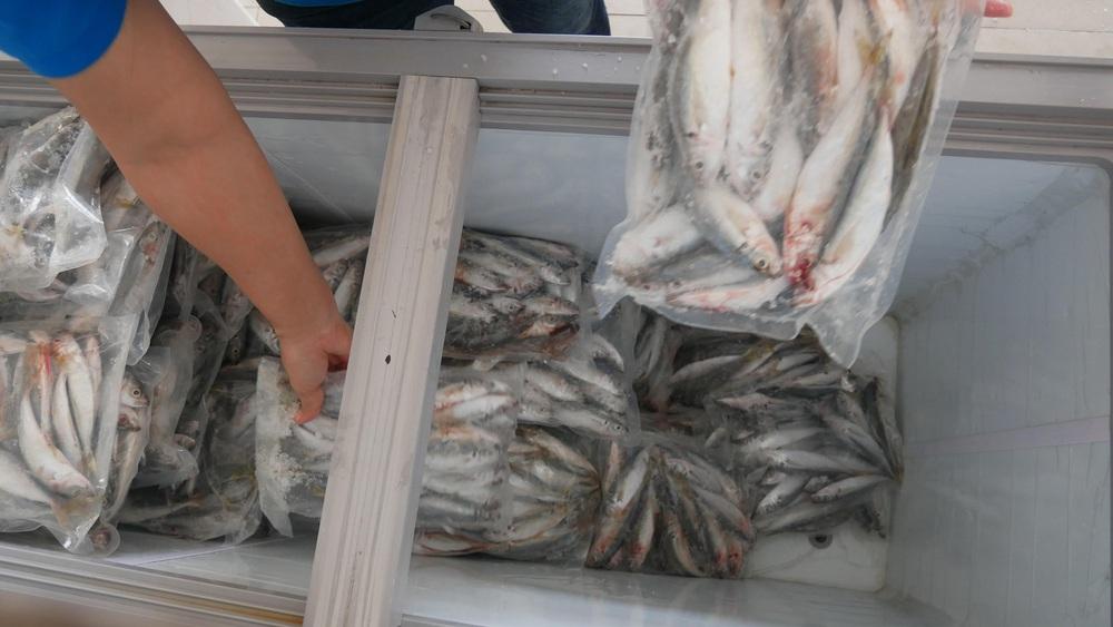 Người dân Quảng Bình gửi 3 tấn cá đặc sản hỗ trợ người Sài Gòn trong mùa dịch - Ảnh 2.