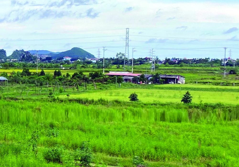 """Tích tụ đất đai cho sản xuất hàng hóa: Chuyện buồn dự án """"siêu nông"""" - Ảnh 1."""