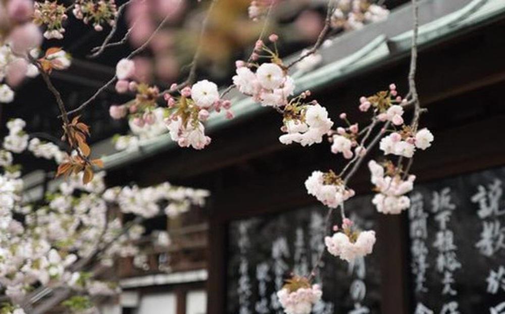 Triết lý sống đơn giản của người Nhật: ''Luôn đổ đầy bát trước khi trả lại'' và bài học tu dưỡng bản thân, mở rộng đường đời mà ai cũng nên học tập