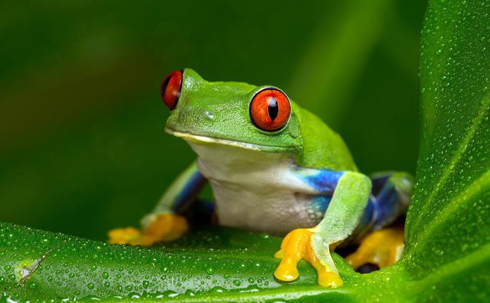 """Nhiệt tình chỉ đường cho cua, ếch bị rủa là đồ """"chết tiệt"""": Bài học ai cũng nên biết khi giúp đỡ người khác"""