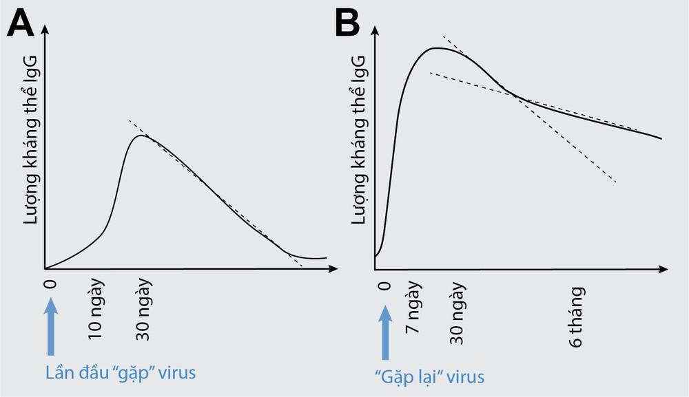 Nhà khoa học người Việt tại Mỹ: 2 lý do nên tiêm vaccine Sinopharm khi đến lượt - Ảnh 4.