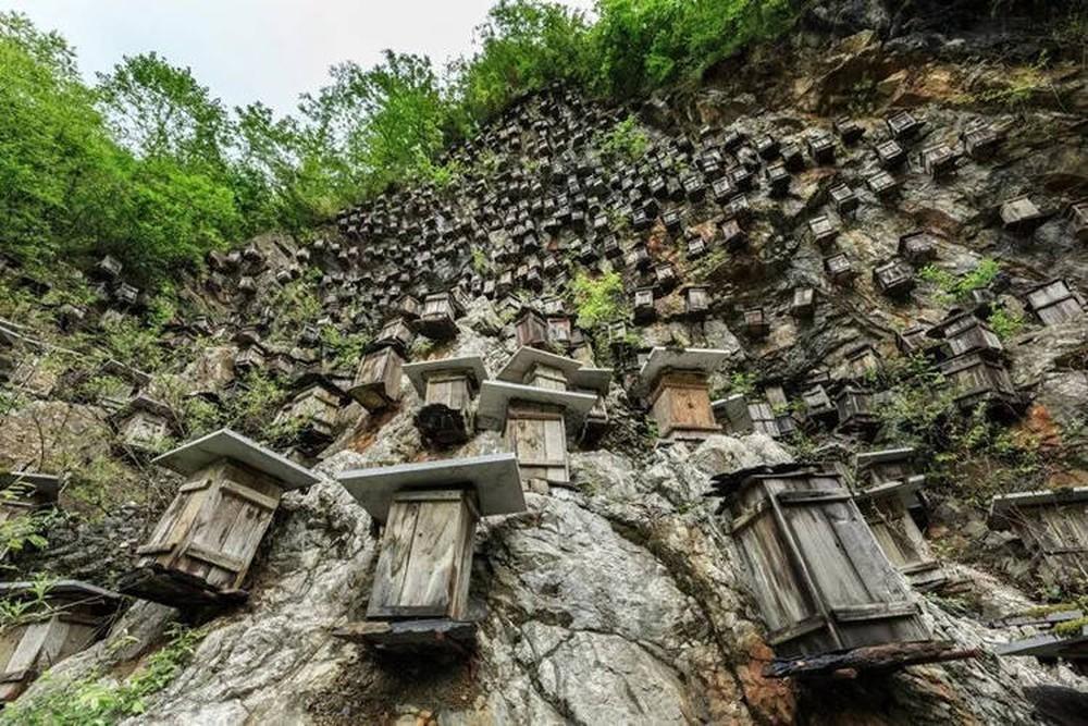 Bức tường của tổ ong trở thành khu bảo tồn vô cùng độc đáo, thu hút khách du lịch - Ảnh 1.