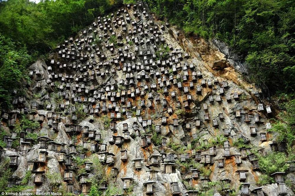 Bức tường của tổ ong trở thành khu bảo tồn vô cùng độc đáo, thu hút khách du lịch - Ảnh 2.