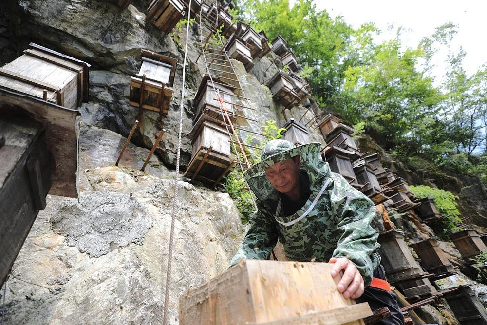 Bức tường của tổ ong trở thành khu bảo tồn vô cùng độc đáo, thu hút khách du lịch - Ảnh 3.