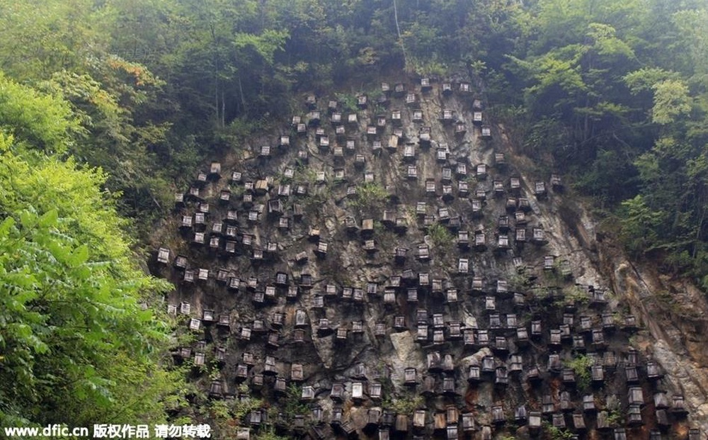 """''Bức tường của tổ ong"""" trở thành khu bảo tồn vô cùng độc đáo, thu hút khách du lịch"""