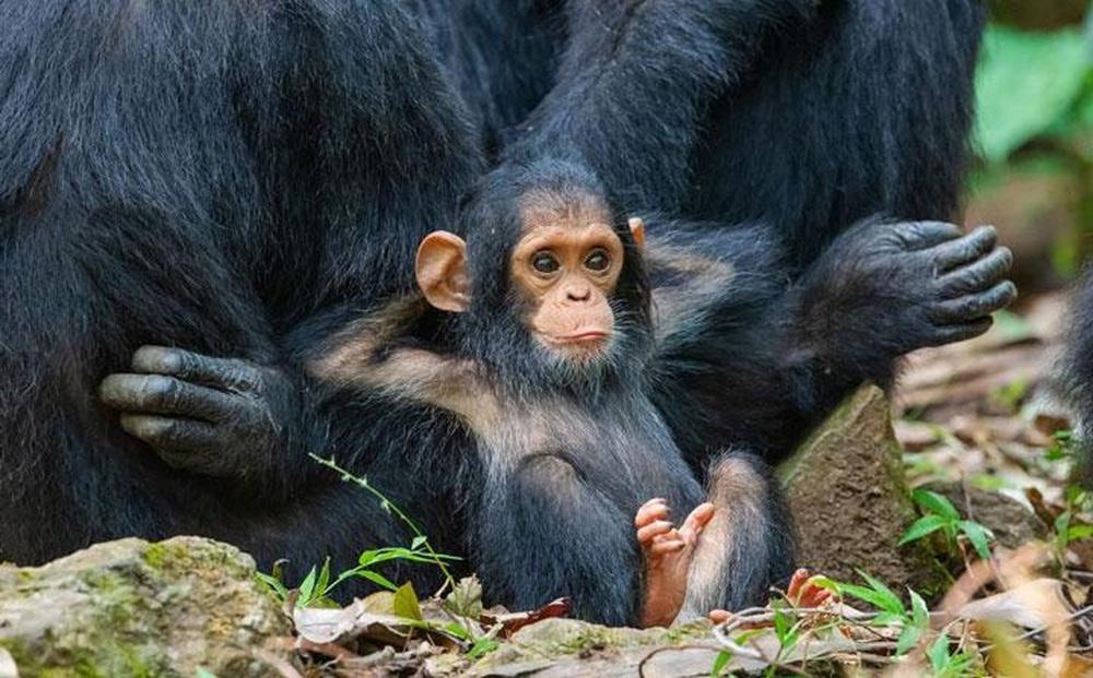 Những khoảnh khắc 'tấu hài' cực kỳ dễ thương của các loài động vật