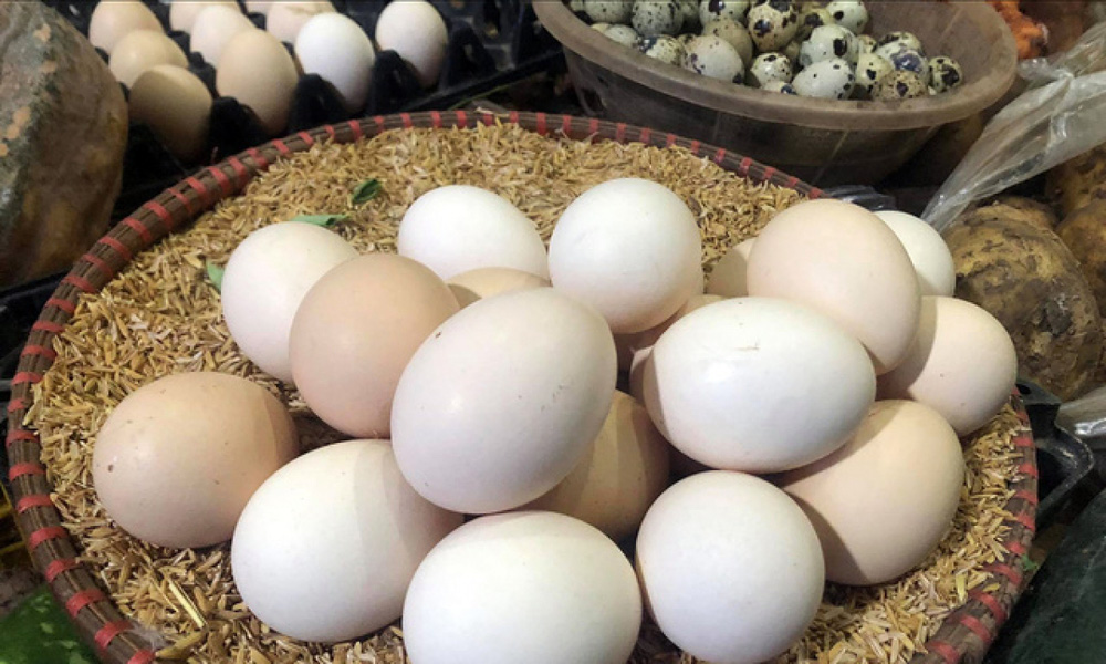 Giá gà xuống thấp kỷ lục trong lịch sử chăn nuôi, bán mỗi con hơn 2,5kg chỉ 12.000 đồng - Ảnh 2.