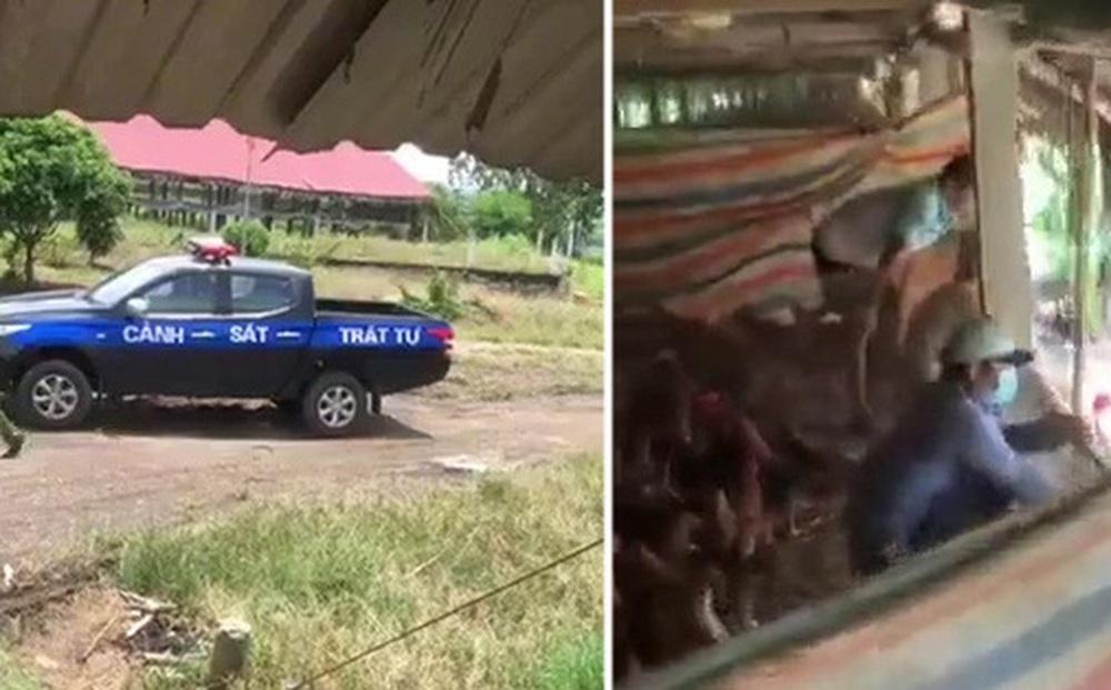 Đang bán gà thì thấy mấy chiếc xe cảnh sát kéo đến nhà, chị chủ trang trại 'hú vía' nhưng sự thật lại khiến người xem bật cười
