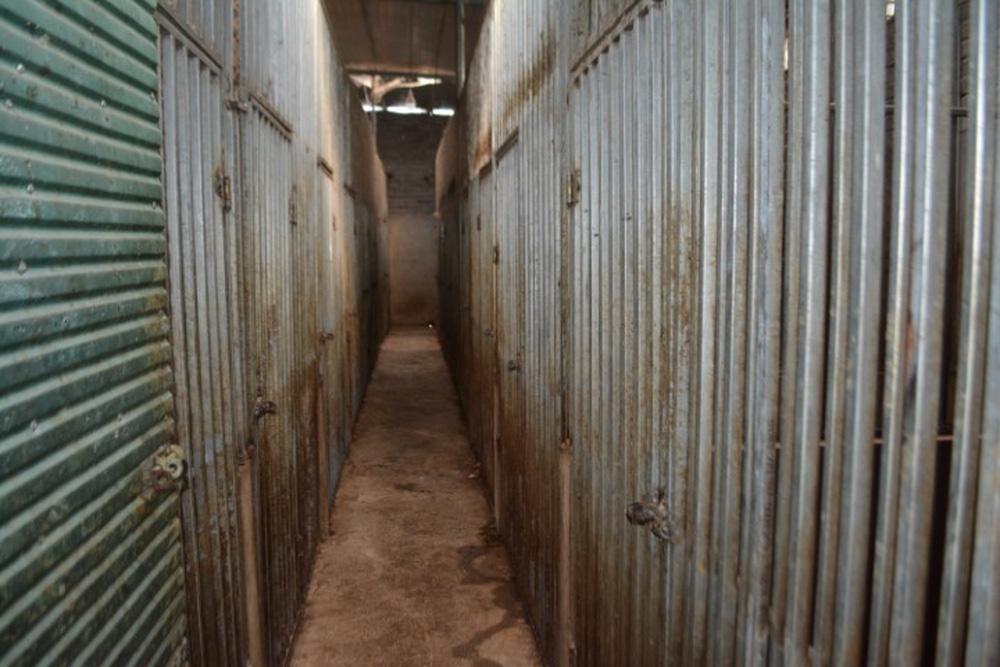 Vụ làm hầm nuôi nhốt hổ như nuôi heo: Kiểm lâm đã từng đi kiểm tra nhưng không phát hiện được gì - Ảnh 1.