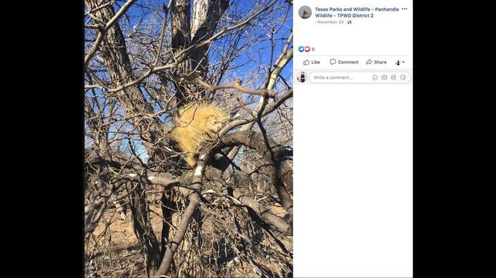 Đi qua 1 cái cây, người phụ nữ bắt gặp con vật lạ khiến dân mạng đau đầu không biết đây là con gì - Ảnh 1.