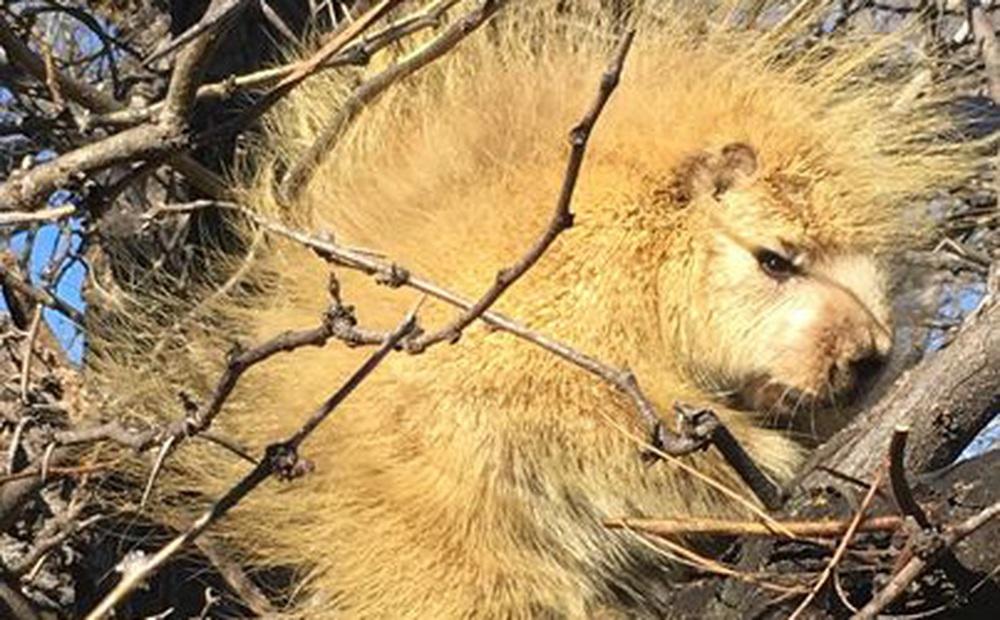 """Đi qua 1 cái cây, người phụ nữ bắt gặp """"con vật lạ"""" khiến dân mạng đau đầu không biết đây là con gì"""