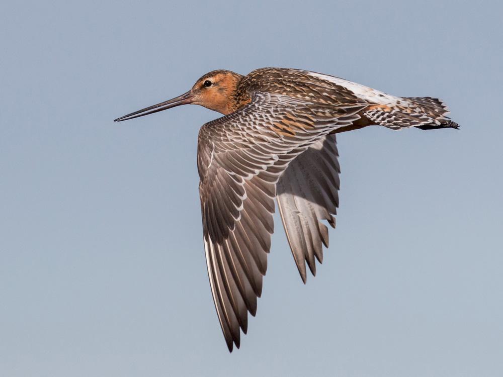 Khám phá khả năng nghe trước sóng thần của các loài chim - Ảnh 1.