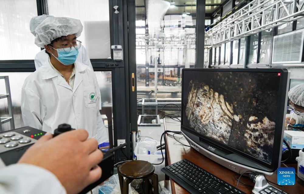Khám phá thế kỷ: Mặt nạ vàng ròng lớn nhất Tam Tinh Đôi vừa được khai quật; Cả thế giới chỉ 4 châu lục sở hữu - Ảnh 6.