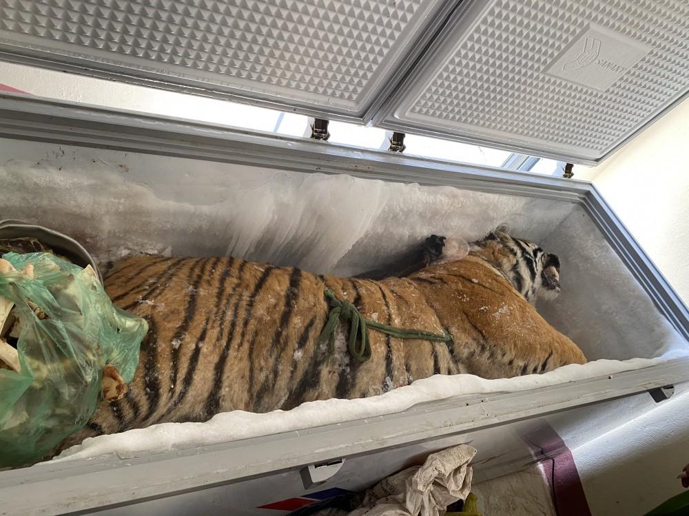 Mở tủ lạnh trong nhà của người đàn ông phát hiện bên trong là 1 con hổ 160kg - Ảnh 1.