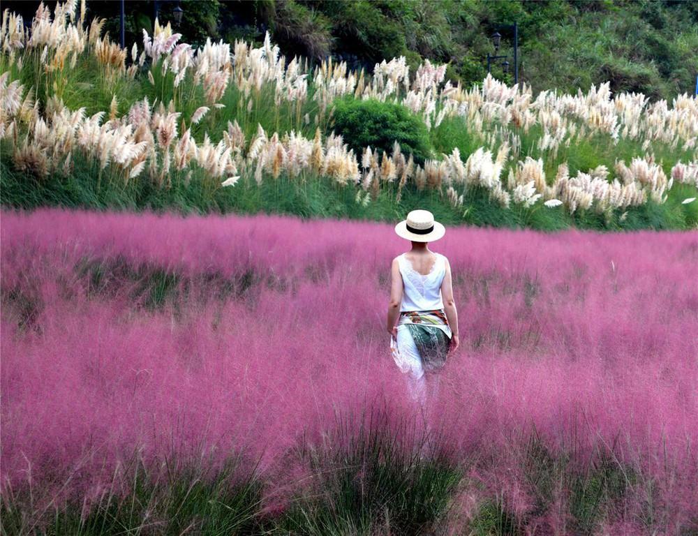 7 ngày qua ảnh: Cô gái chụp ảnh trên cánh đồng cỏ hồng ở Trung Quốc - Ảnh 2.