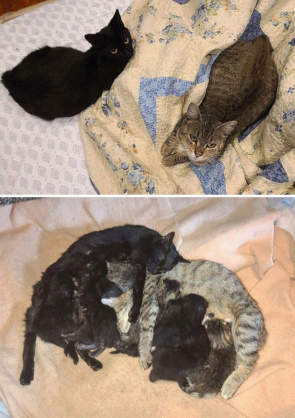 Mèo cưng sinh con, cô gái thấy 1 bé kỳ lạ liền đem đi khám rồi ngỡ ngàng phát hiện nó không phải mèo thường - Ảnh 2.