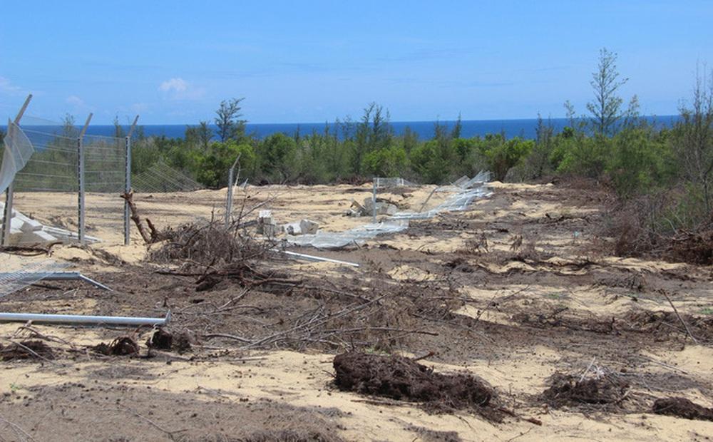 Khu rừng phòng hộ có diện tích 5,26 ha ở xã Mỹ An vừa bị phá. (Ảnh: Người lao động).