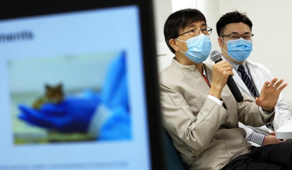 Chuột nhiễm COVID-19 hấp hối vì một hiện tượng lạ: Giáo sư Hồng Kông kêu gọi làm 1 việc khẩn cấp ngay trước mùa đông - Ảnh 1.