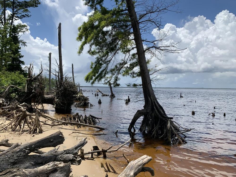 Rừng ma xuất hiện dọc bờ Đông nước Mỹ - Ảnh 3.