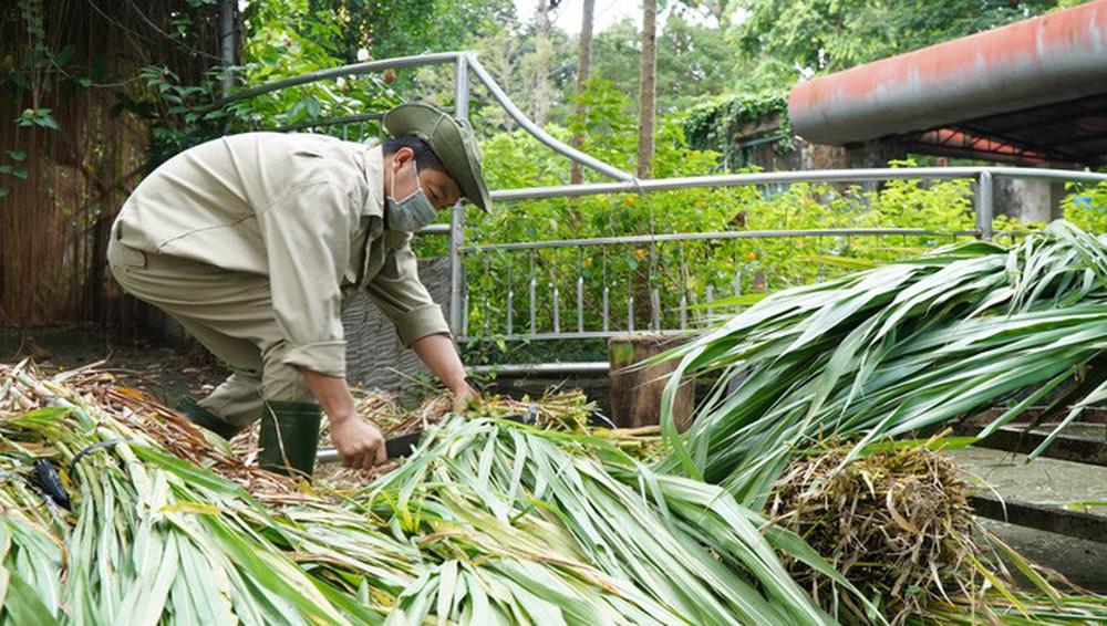 Cận cảnh Thảo Cầm Viên Sài Gòn sau nhiều tháng đóng cửa - Ảnh 6.