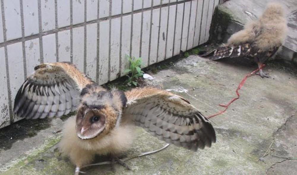 Nhặt được 2 con chim non mang về nhà nuôi, một thời gian sau, ông lão phải tiễn khách khi biết lai lịch của chúng - Ảnh 2.
