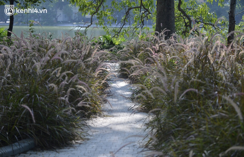 Ảnh: Hàng ghế ở hồ Gươm bị cỏ dại mọc bao quanh sau 2 tháng Hà Nội thực hiện giãn cách - Ảnh 6.