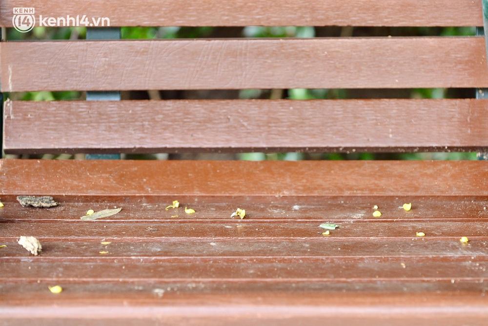 Ảnh: Hàng ghế ở hồ Gươm bị cỏ dại mọc bao quanh sau 2 tháng Hà Nội thực hiện giãn cách - Ảnh 10.