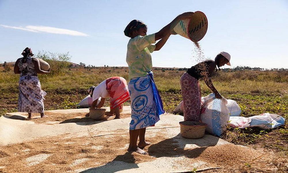 Đáng báo động, Madagascar đang trải qua nạn đói đầu tiên trên thế giới hoàn toàn do biến đổi khí hậu gây ra - Ảnh 3.