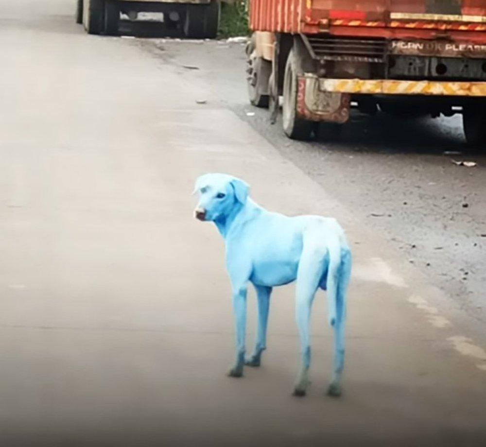 Chó đột nhiên đổi màu lông xanh sau khi bơi trên sông: Hé lộ nguyên nhân bất ngờ - Ảnh 3.