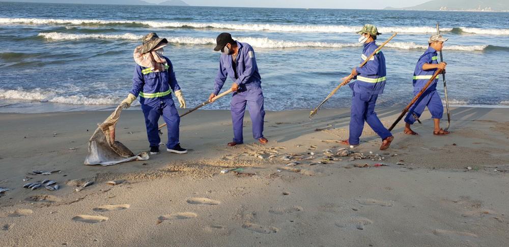 Cá chết trắng chưa rõ nguyên nhân dọc bờ biển Đà Nẵng - Ảnh 5.