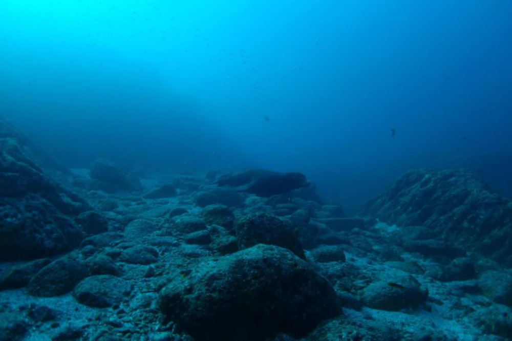 Những phát hiện ngoài sức tưởng tượng chứng minh đại dương là thế giới kỳ dị, bí ẩn - Ảnh 12.