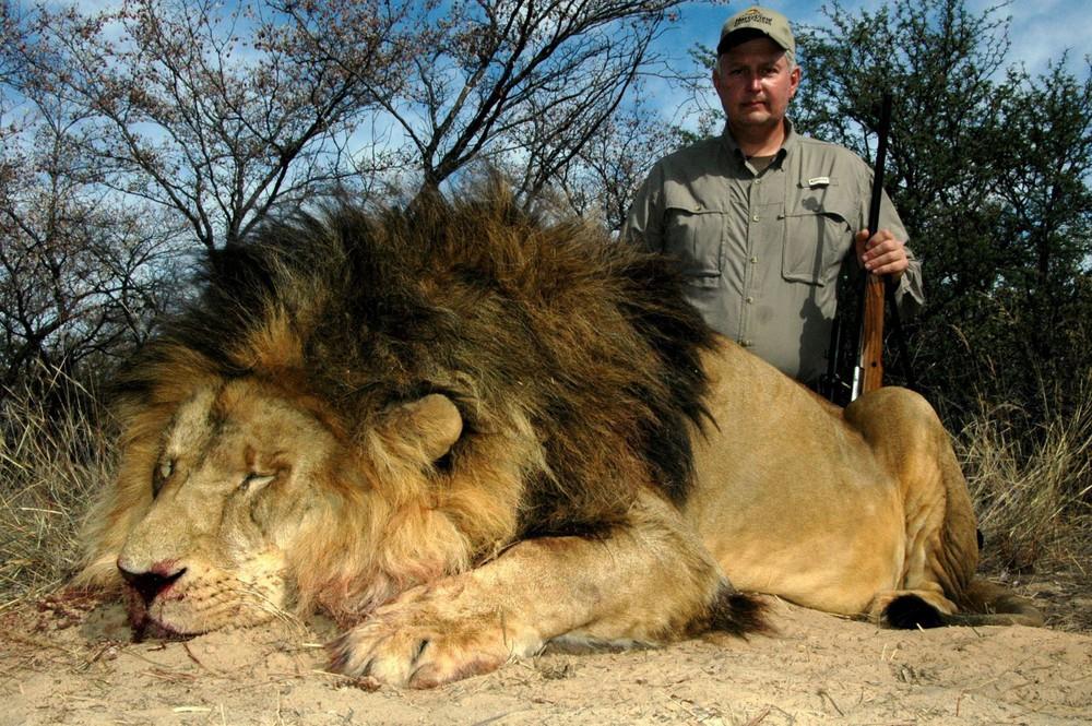 Cảnh báo: Không chỉ tê giác và hổ, sư tử châu Phi cũng sẽ sớm biến mất thôi - Ảnh 3.