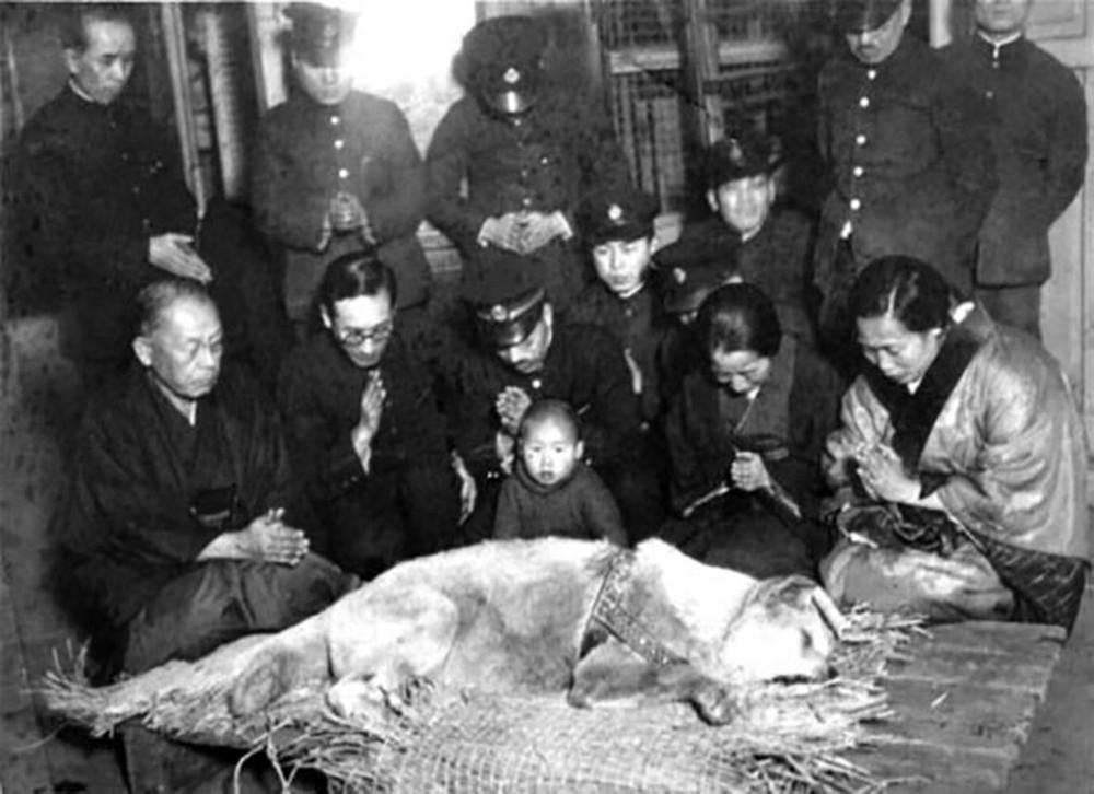 Câu chuyện cảm động về chú chó hơn 9 năm đợi người chủ quá cố ở sân ga rồi ra đi trong niềm tiếc thương của cả nước Nhật - Ảnh 5.