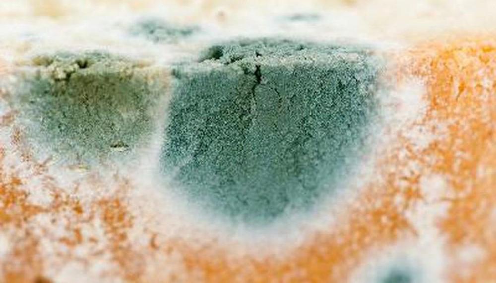 Nấm mốc trong nhà có những màu sắc này thì phải xử lý càng nhanh càng tốt, đừng để hỏng nhà và hại cả sức khỏe - Ảnh 5.